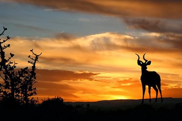 africa safari best travel and adventure