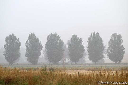 Poplar trees and hay paddock, pictured from SH2 at Poukawa, south of Hastings, in wet, drizzly, rainy weather. photograph