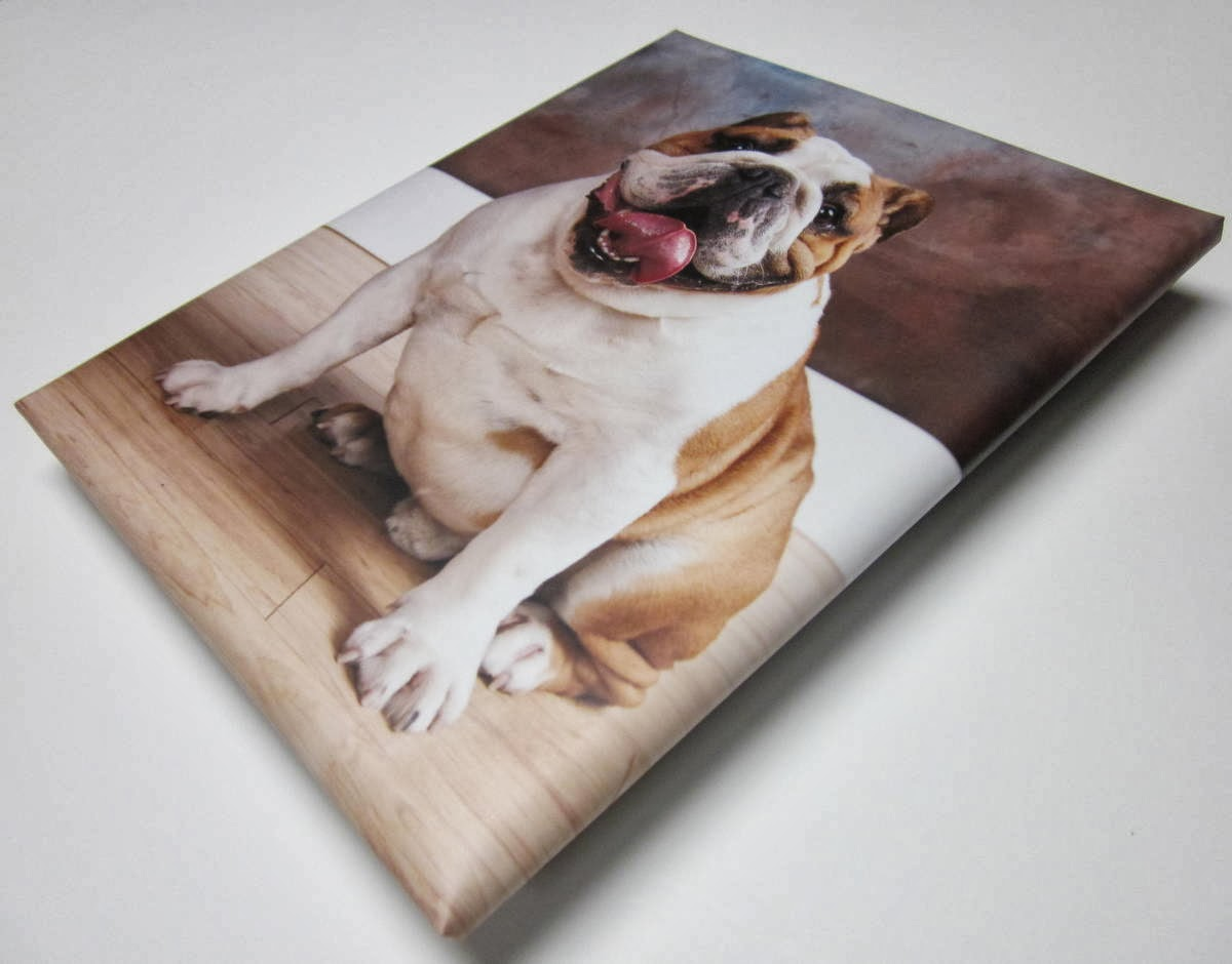 Print Wrap, Pet Photography