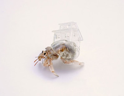 Hermit Crab Shell Seen On www.coolpicturegallery.us