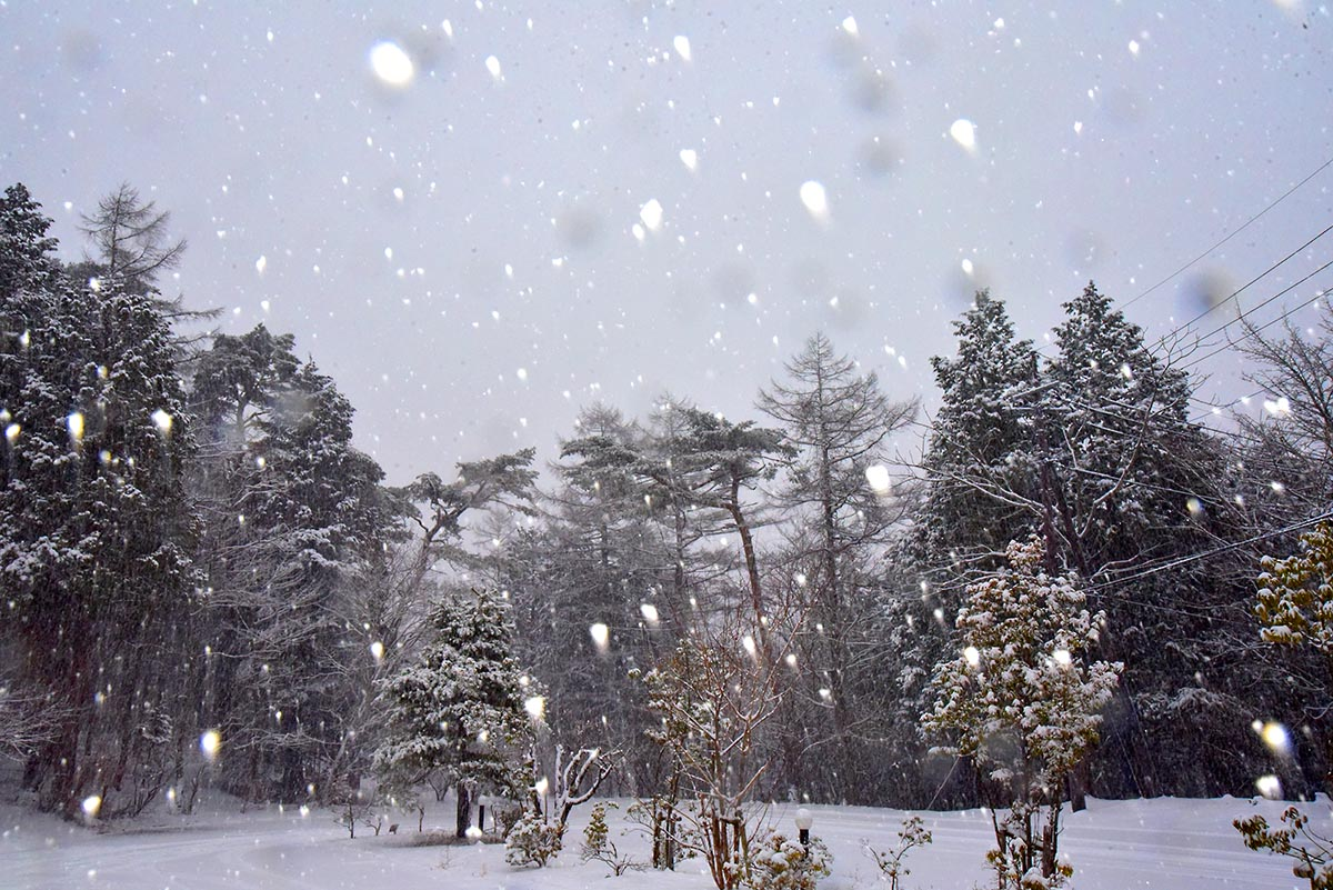 小雪 (女優)の画像 p1_24
