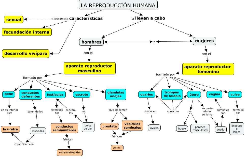 aparato reproductor femenino biocienciasdesamuel
