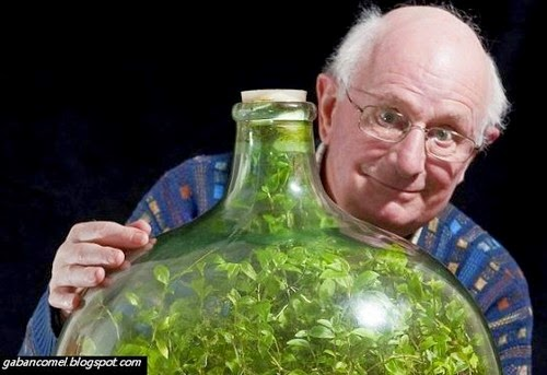 Unik Kebun Pelik Tersimpan Didalam Botol