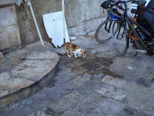 Кот-в-Дубровнике