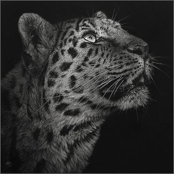 Interesting pencil art animals drawings funnywebpark for Easy animal paintings