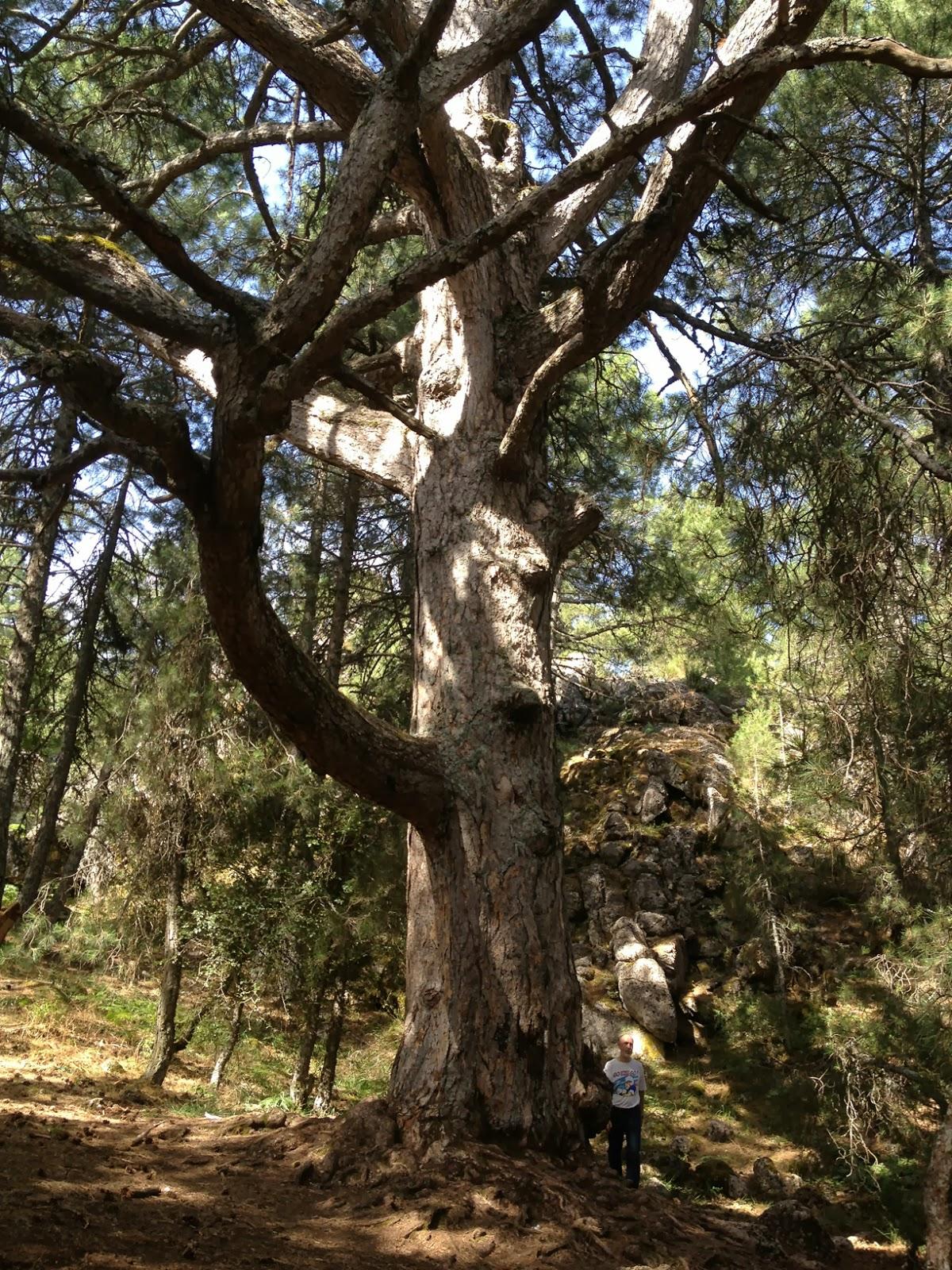 Excursiones por el mundo ri par y la sierra del - Altos del toril ...