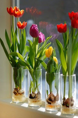 Tulipanes Holandeses en Agua