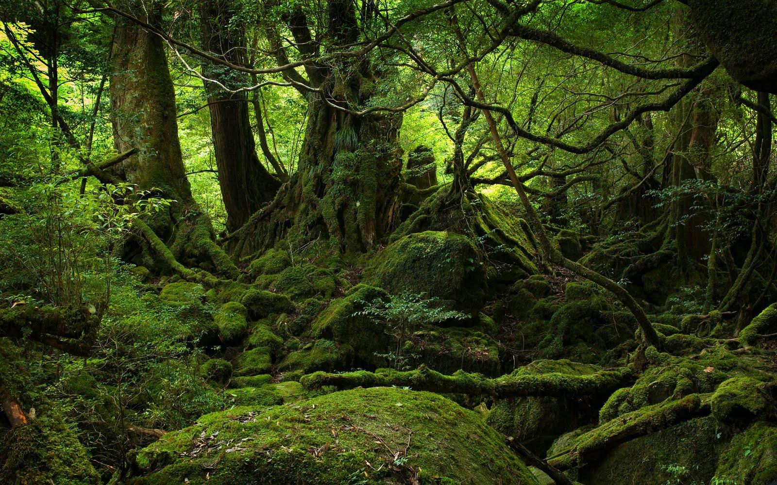 http://1.bp.blogspot.com/-oBS5fexMhHE/TtzQ6BleI7I/AAAAAAAAAqk/2QX6Ve1otr4/s1600/forest-background-2-748415.jpg