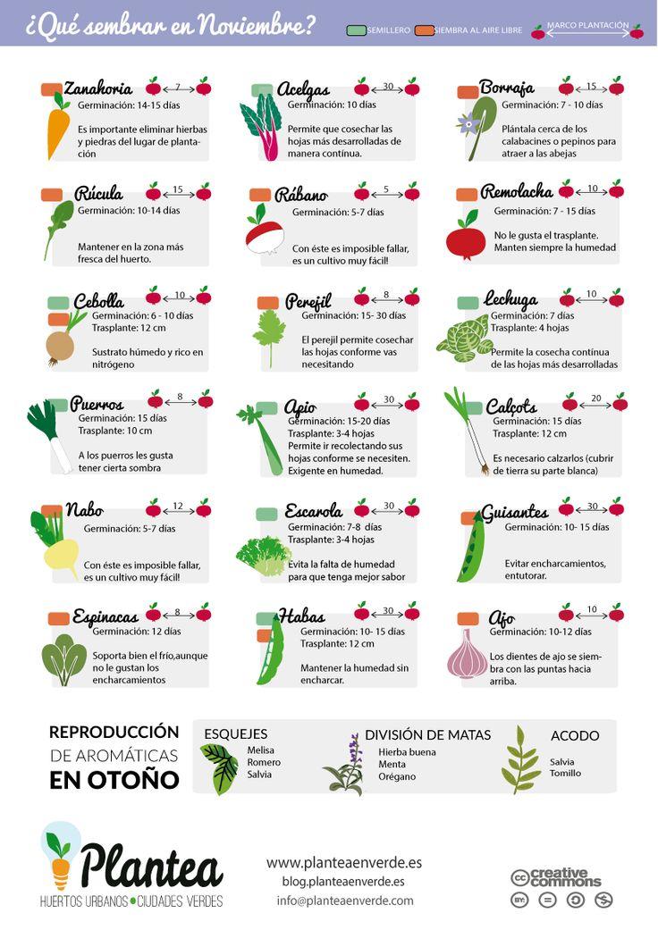 El huerto en macetas qu sembrar en noviembre - Que plantar en el huerto ...