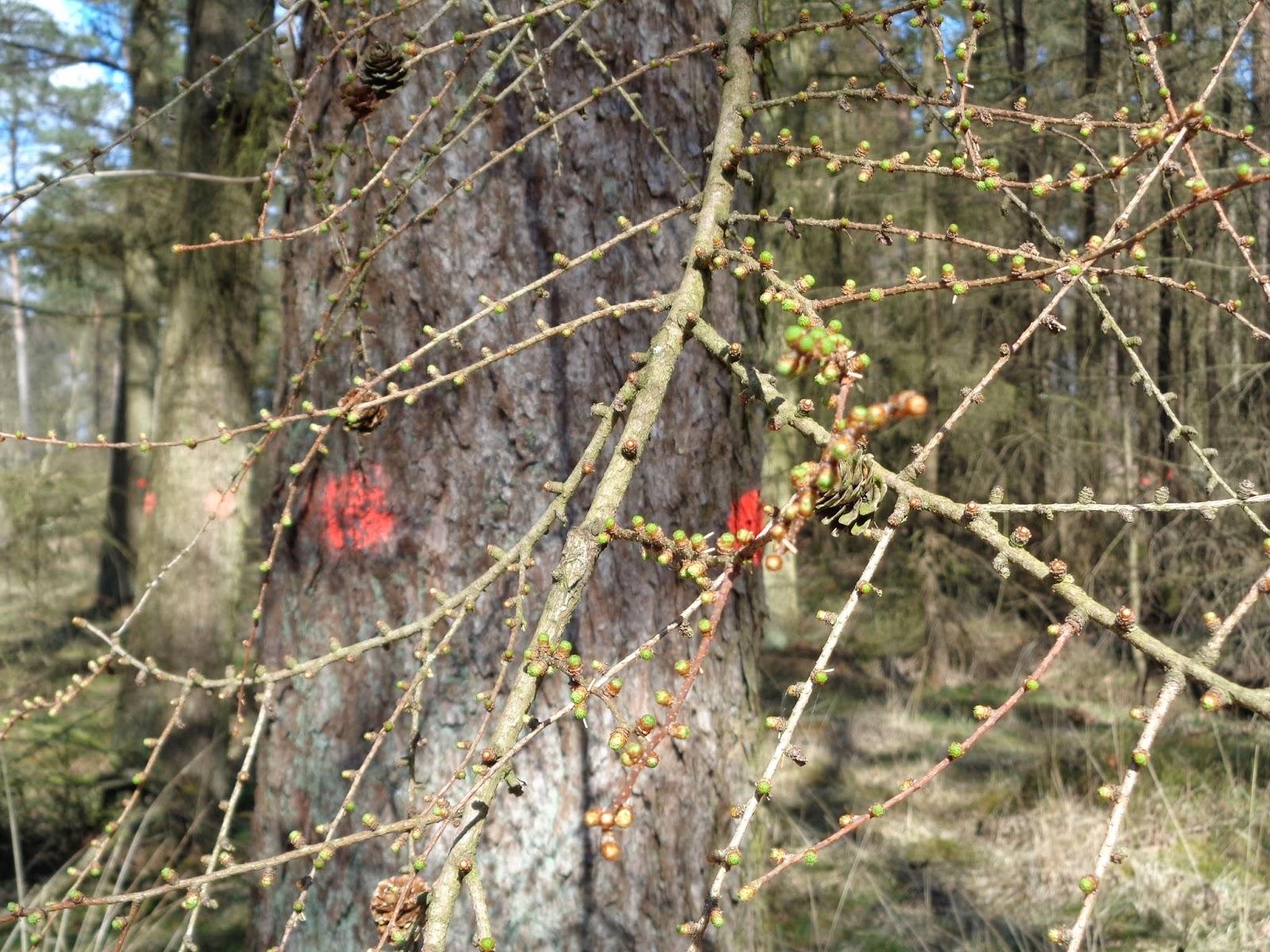 bomen zagen techniek