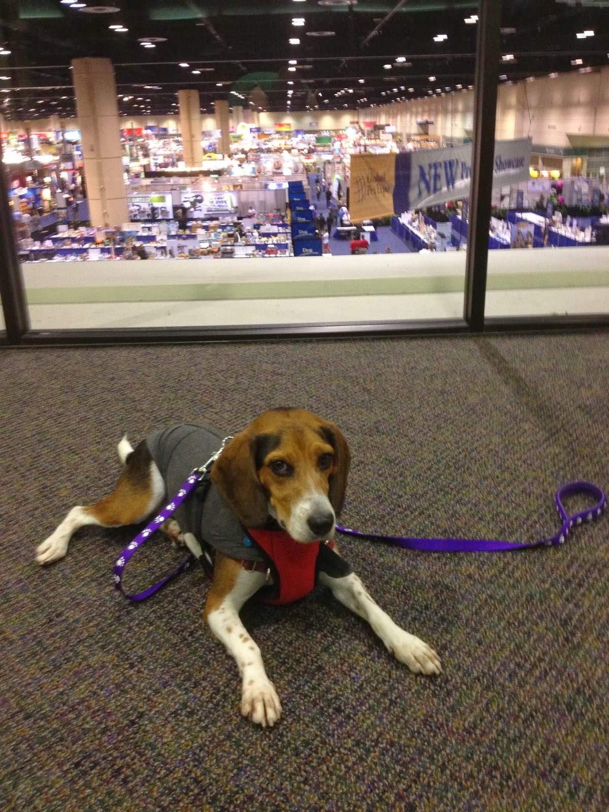 Life With Beagle: Global Pet Expo: 8 pet-friendly Orlando spots to ...