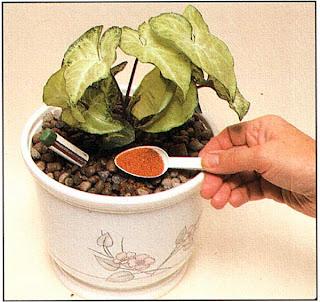 Насыпьте специальное удобрение для гидрокультуры поверх глиняных гранул