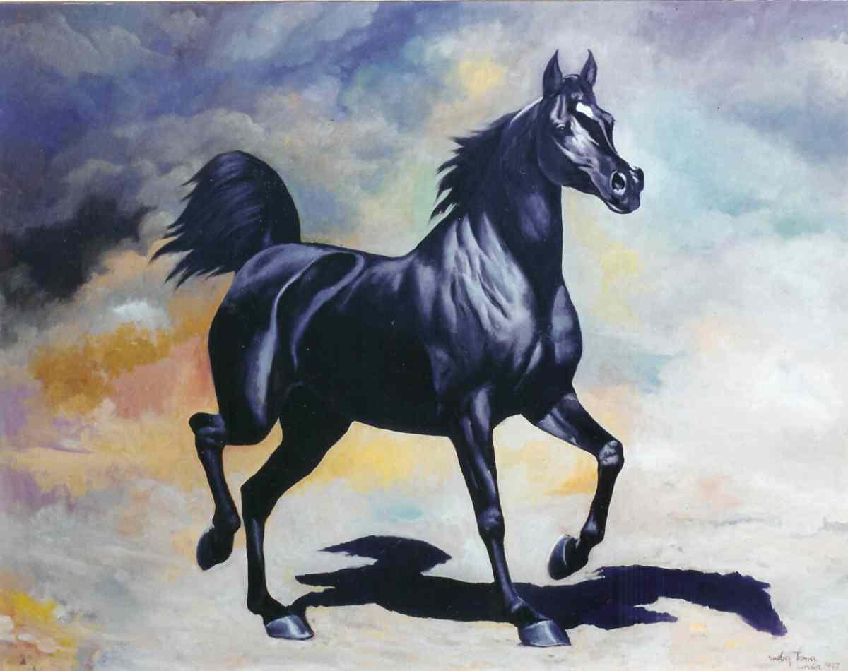 arab black horse free desktop wallpaper