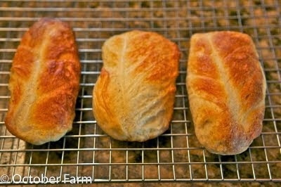 Cabbage Bread Recipe