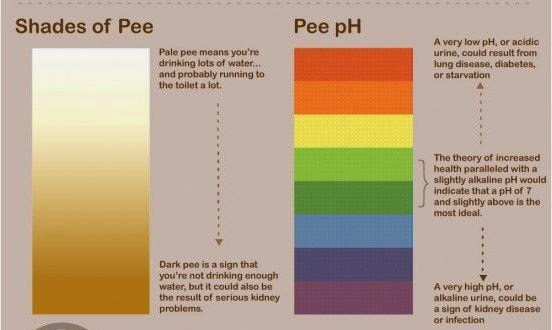 Your Poop And Pee Reflects Your Health What You Need To
