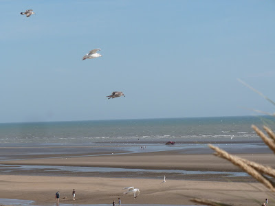 Seagulls at Camber