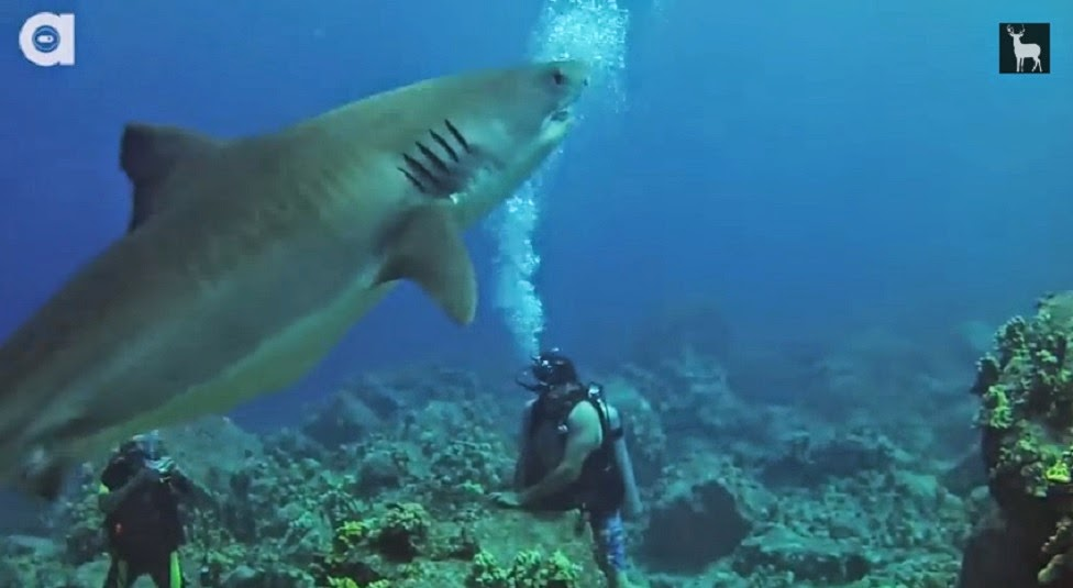Alexander Dane Farnham dives with a tiger shark in Hawaii to overcome his fear