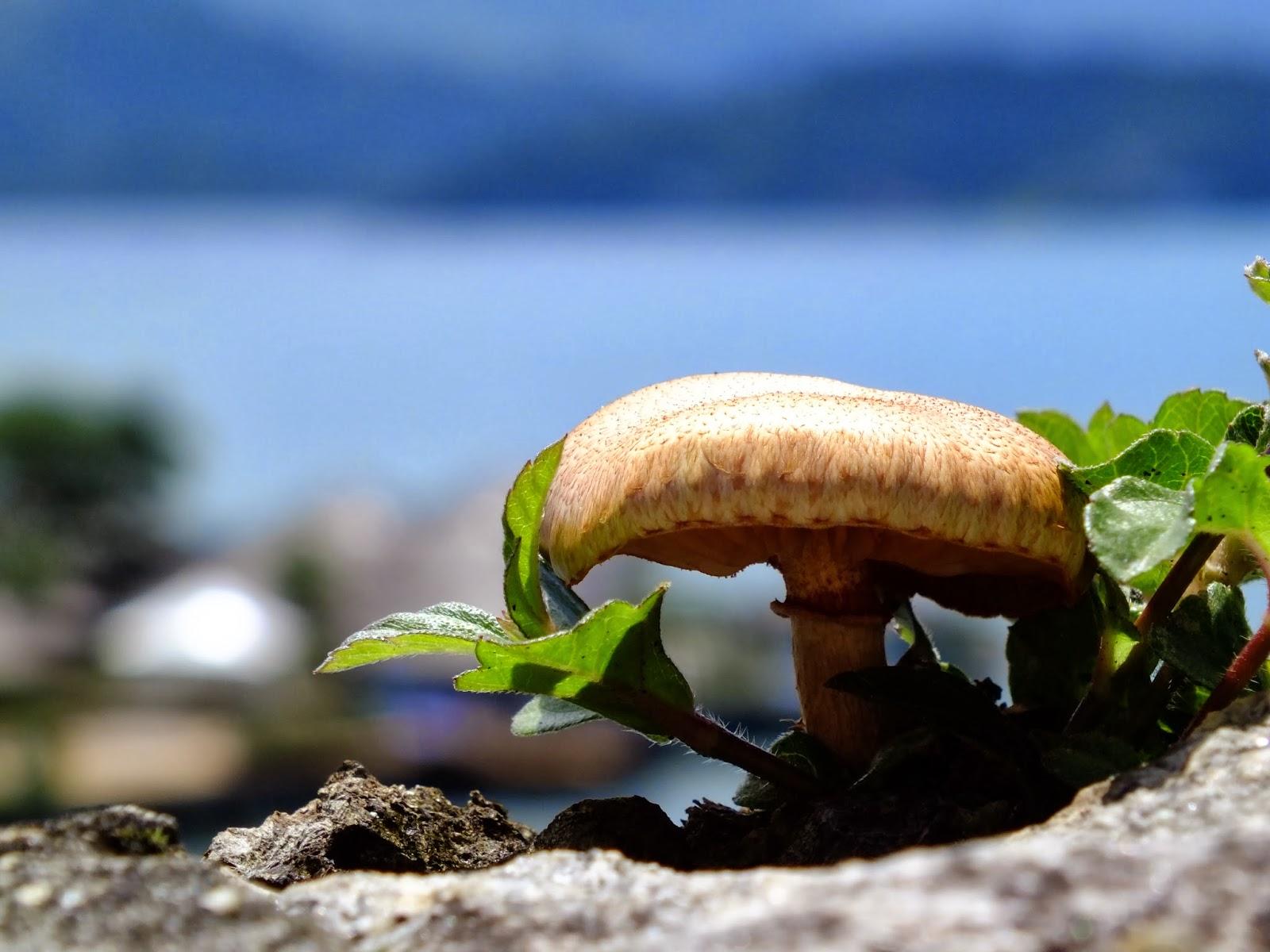 http://aprendendocomasimagens.blogspot.com/2013/11/a-moradia-do-desconhecido.html - No mundo da biodiversidade, também existe a imaginação. Nela podemos dizer que encontramos diversidades de moradias que diga-se presente em um mundo imaginário da fantasia...