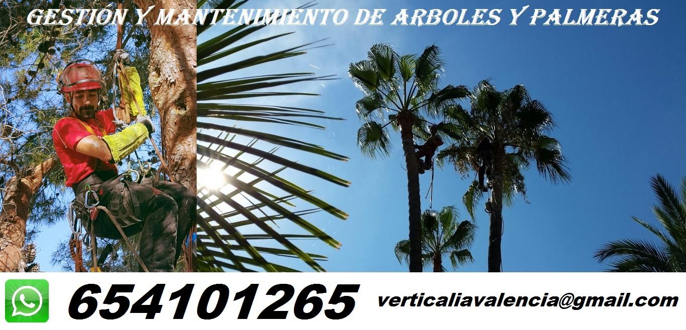 Poda de Arboles Y Palmeras en Valencia