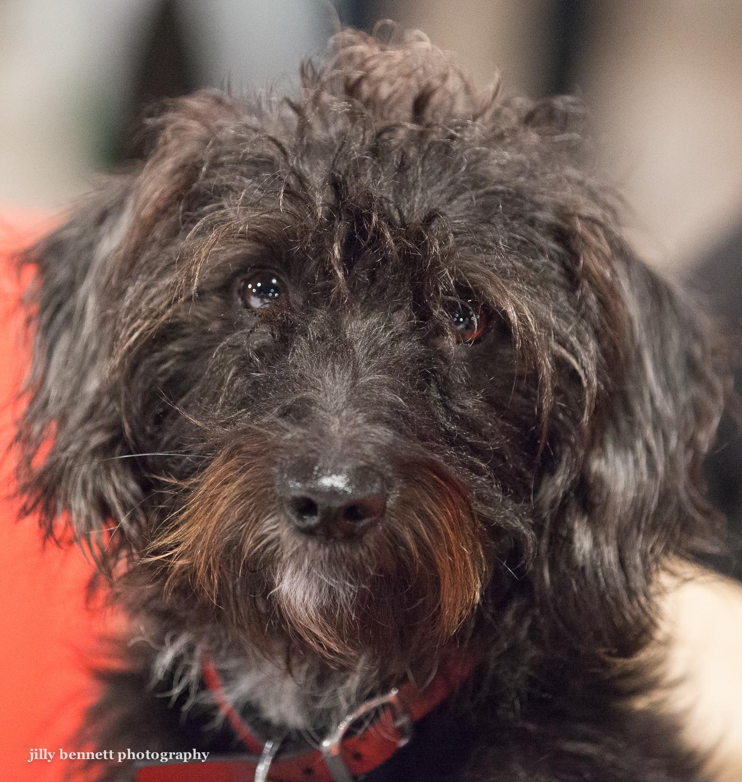 Dog Formal Wear Amazoncom