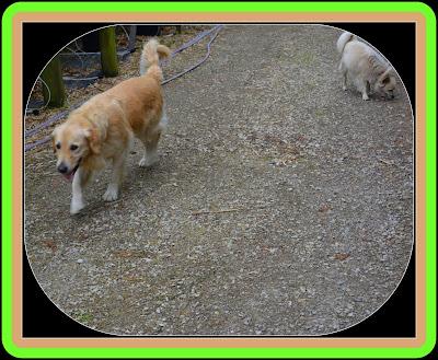 chiens en balade
