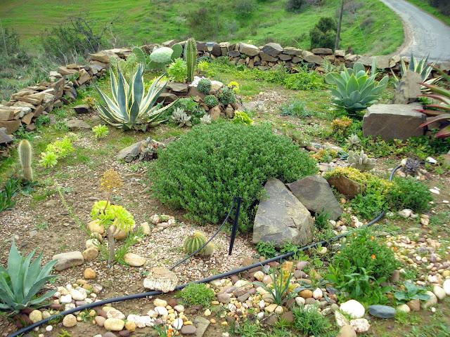 Janeiro 2013 - Vejam quanta erva daninha!!