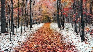 Los árboles de otoño camino & nieve