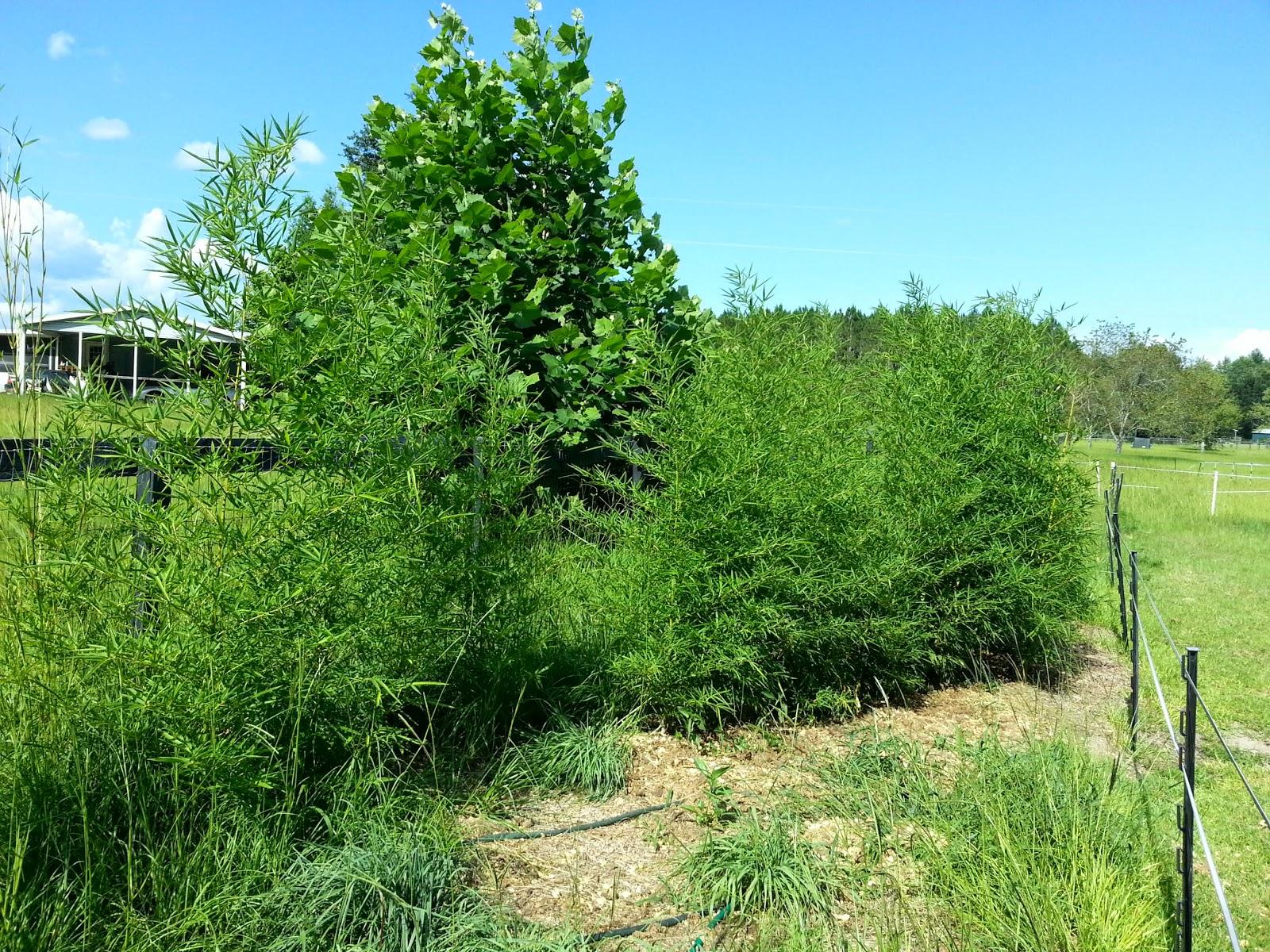 Growing Running Plants in Florida