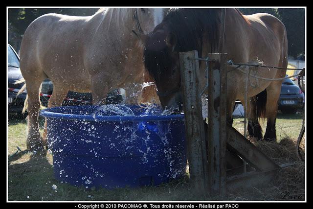 chevaux buvant à un point d'eau à la foire Commerciale et Agricole de Sedan