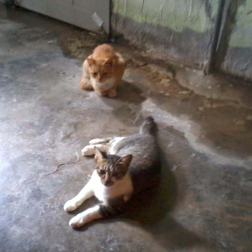Kisah Ibu Kucing bersama Anaknya Bahagian 1