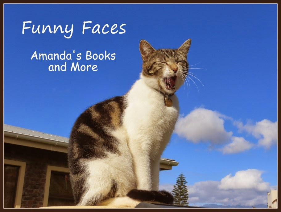 Funny cat faces and more amanda s books and more