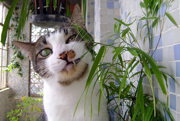 Blog da phoebe plantas boas de gato comer Plantas seguras para gatos
