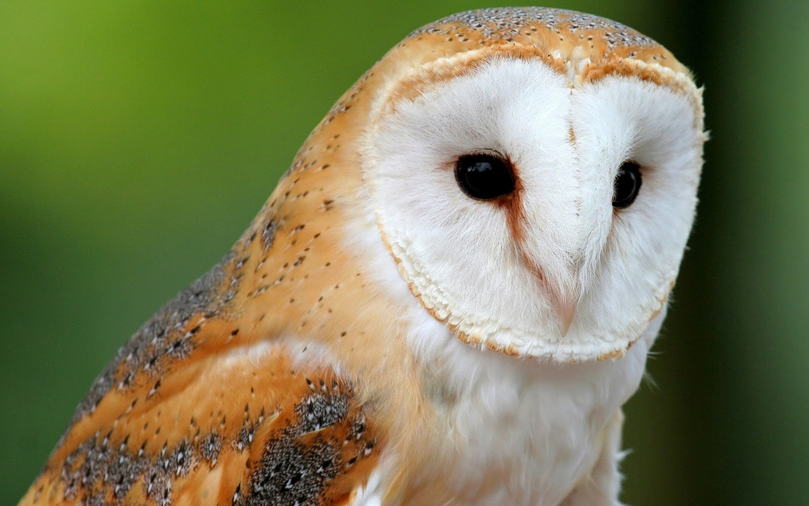 Imágenes de Búhos - Aves Exoticas   Fotos e Imágenes en