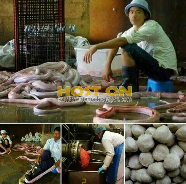 Bebola ikan diperbuat dari daging ular didakwa dijual di Malaysia