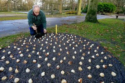 7 millones de bulbos en Keukenhof. Tulipanes y otros bulbos