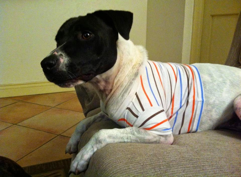 Thunder Shirts For Dogs T Shirt Design Database