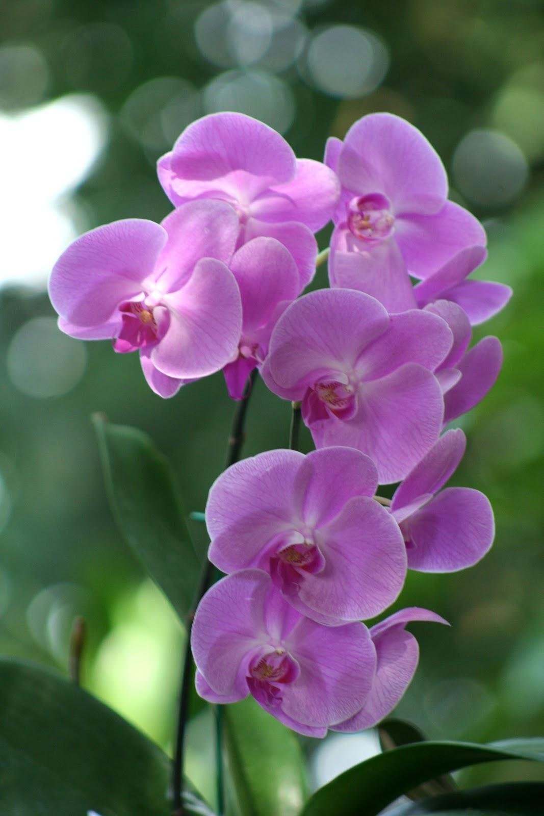 Sientateee el hor scopo de las flores for Cuidados orquideas interior