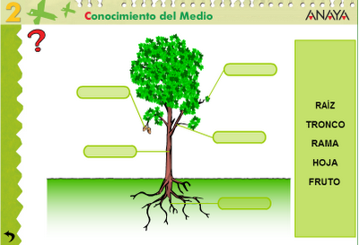 Laborat rio de inform tica educativa da escola angelina for Todas las plantas ornamentales