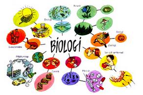Objek Permasalahan Biologi Tingkat Organisasi Kehidupan