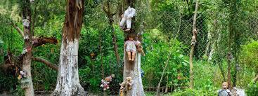 En el bosque desnudo