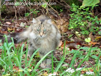 feral cat in park