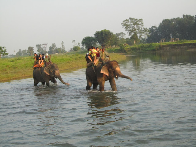 Honeymoon trip in Chitwan