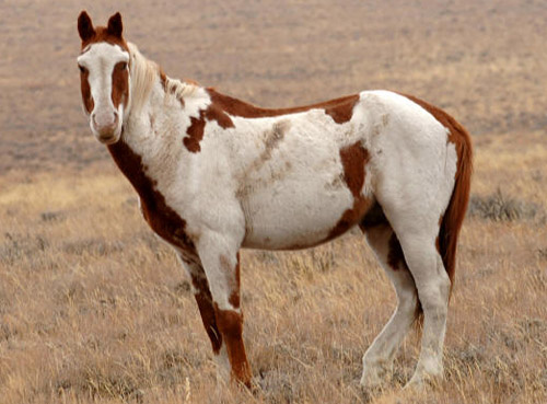 Hd Animals Wallpapers Mustang Horse