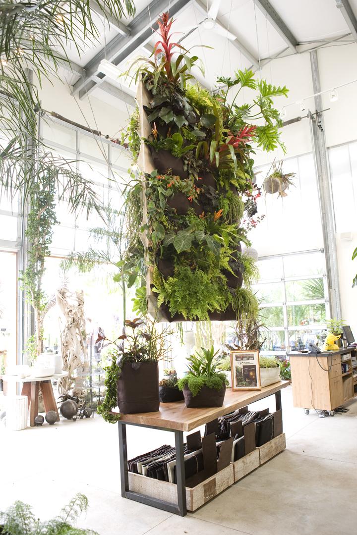 Xardinnova v jardines verticales enmarcados for Plantas utilizadas en jardines verticales