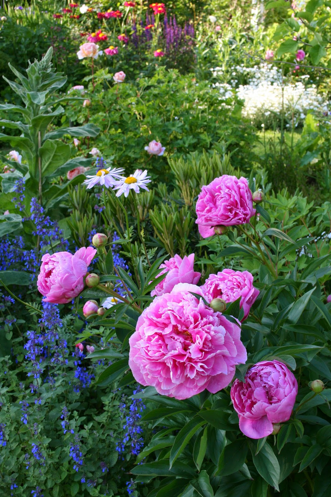 pionträdgård
