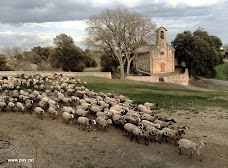 Les ovelles del Codony