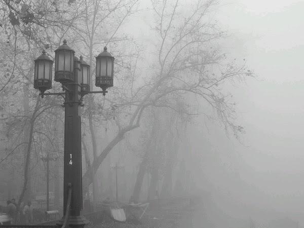"""""""En la Niebla"""""""