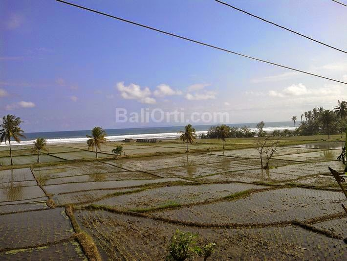 Medewi Beach seen from the highway with a paddy field near the beach.