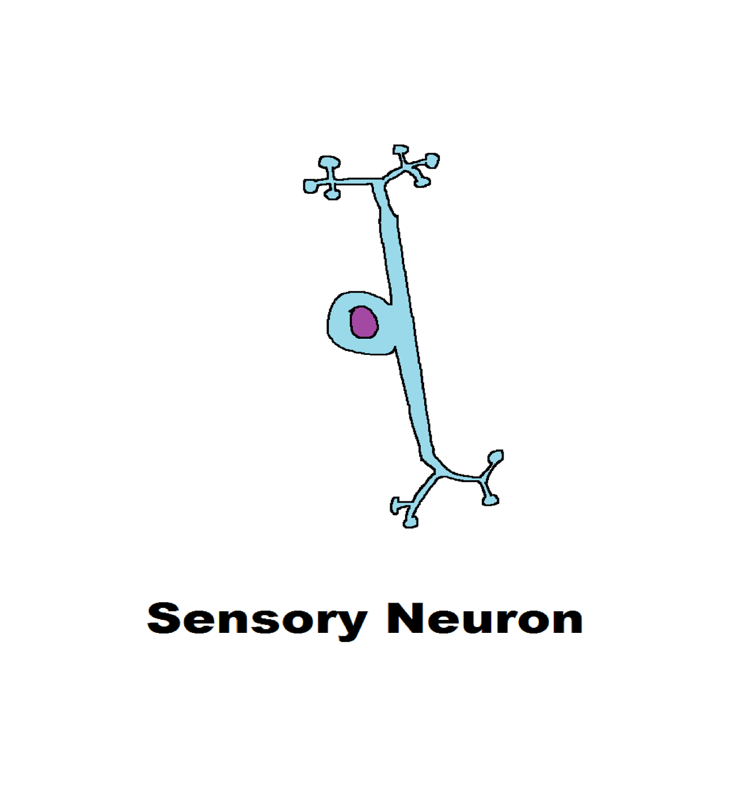 Function Of Motor Neuron Human Nervous System Science