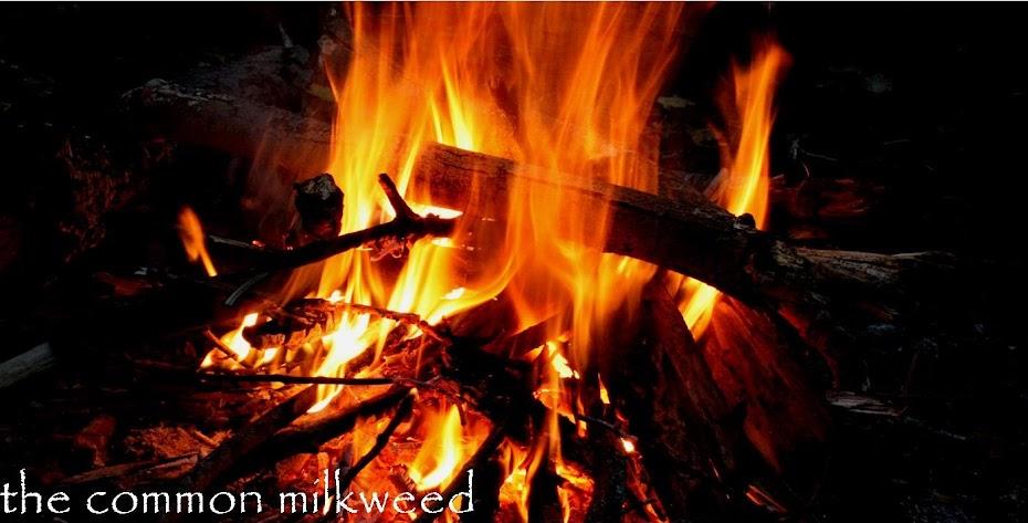 the common milkweed